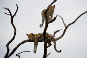 Safari Scapes Jao