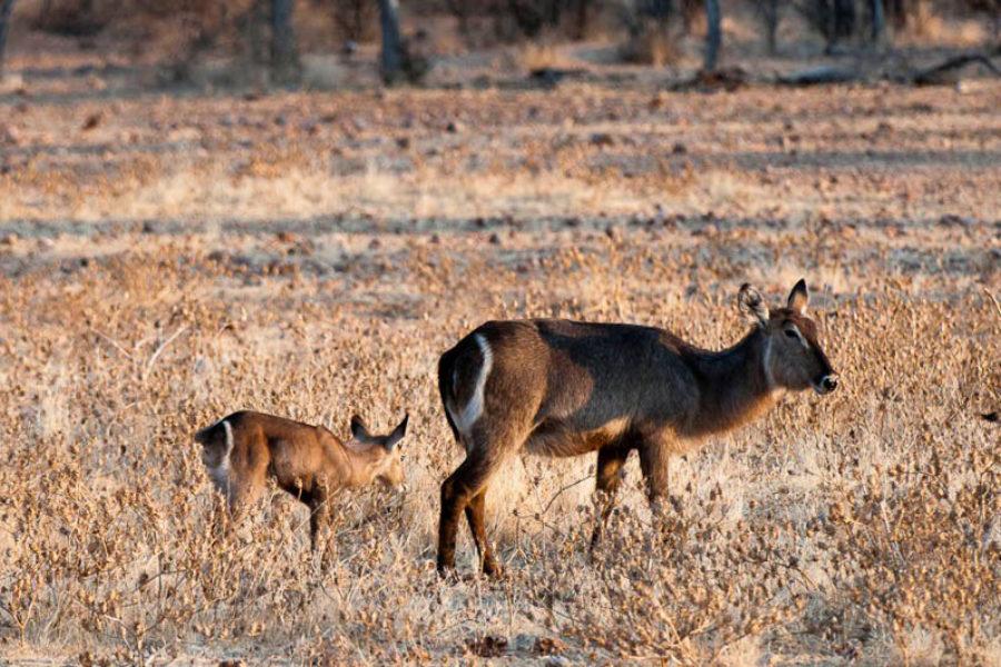 Safari Scapes Little Ongava