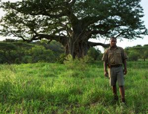 Safari Scapes Singita Pamushana