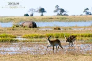 Safari Scapes Zarafa