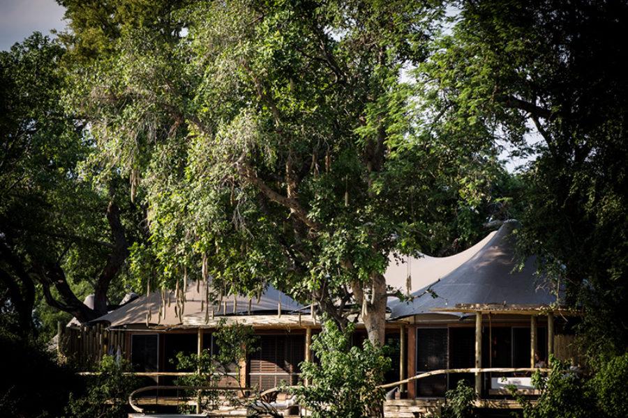 Safari Scapes Botswana Mombo 11