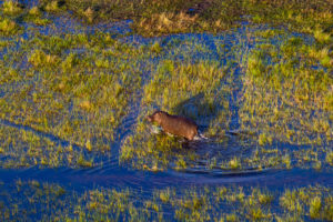 Safari Scapes Botswana Vumbura 17