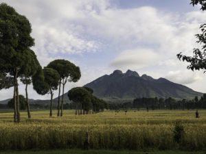 Safari Scapes Destinations Rwanda