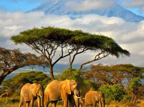 Safari Scapes Tanzania