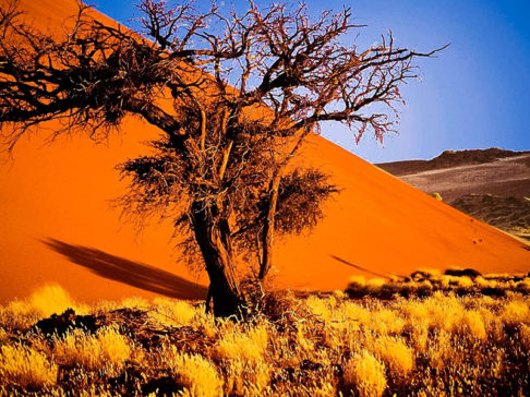 Safari Scapes Namibia