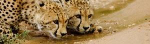 Safari Scapes Contact Us