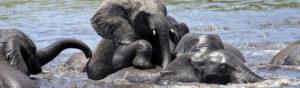 Safari Scapes About Us