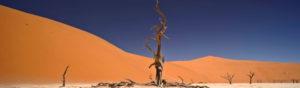 Safari Scapes Nambia