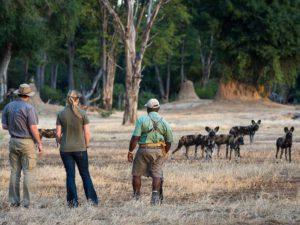 Safari Scapes Little Ruckomechi