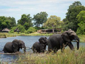 Safari Scapes Kings Pool
