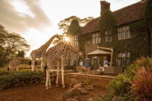 Safari Scapes Kenya Giraffe Manor