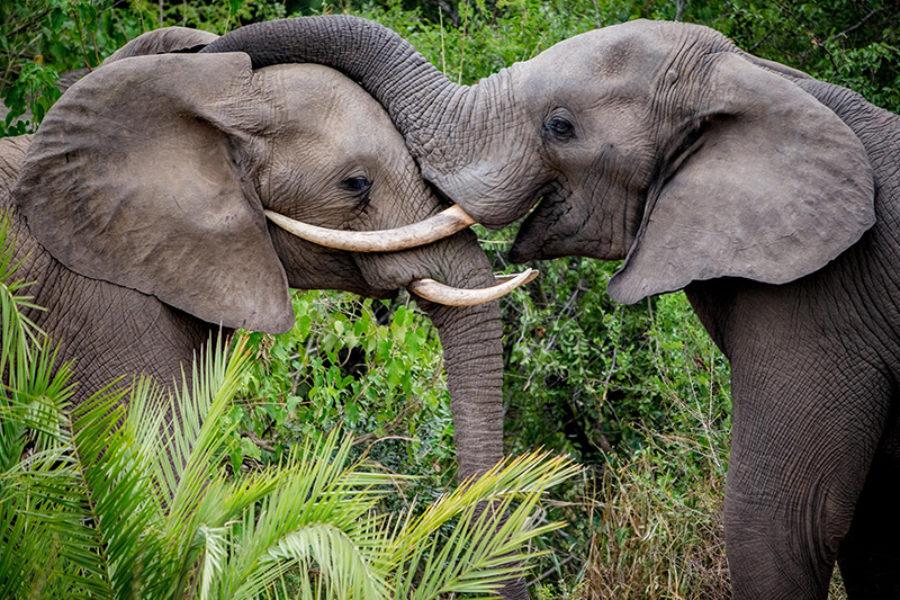 Safari Scapes South African Kirkmans Kamp