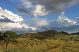Safari Scapes South African Safari Tswalu