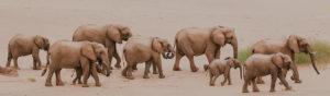 Safari Scapes Gallery