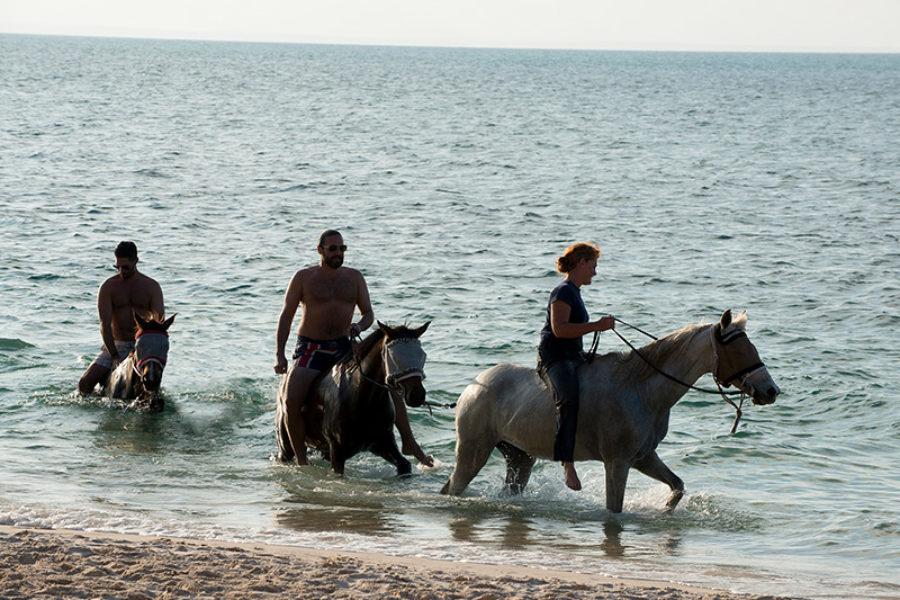 Safari Scapes &Beyond Benquerra Island