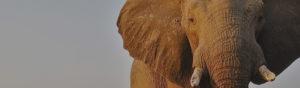 Safari Scapes Zambia