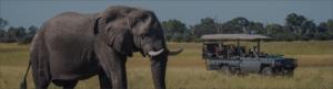 Safari Scapes Usa Component 6 – 1